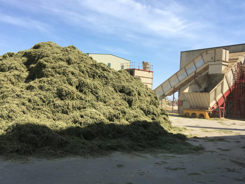 Análisis de las exportaciones de alfalfa deshidratada del primer semestre de la campaña 2019/20